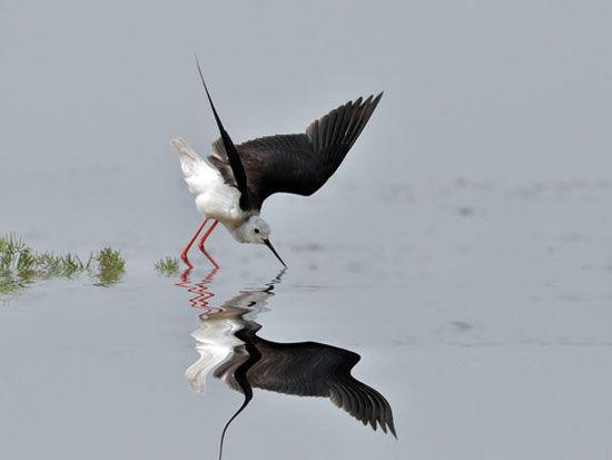 兴海湖鸟类保护区:坐落在东七里海。建有观鸟走廊、水榭凉亭。幽静的环境,秀美的水草,丰盛的饵料,为鸟类提供了理想的栖息繁衍之地。   七里海水生植物园:位于兴海湖鸟类保护区内,占地30亩。园内栽植数十种观赏性野生植物,成为恢复生物物种多样性试验基地。   西七里海湿地风光园:位于西七里海,占地一万亩。2009年初兴建,开挖疏浚一环、一纵、三横、107条沟渠。开辟500亩水面,建鸟岛2个,浅滩8处。乘船在绿苇掩映的沟渠中穿行,观无边芦荡,赏群群飞鸟,看鱼跃蟹行,别有一番风情。   梁斌文学艺术馆:位于《红