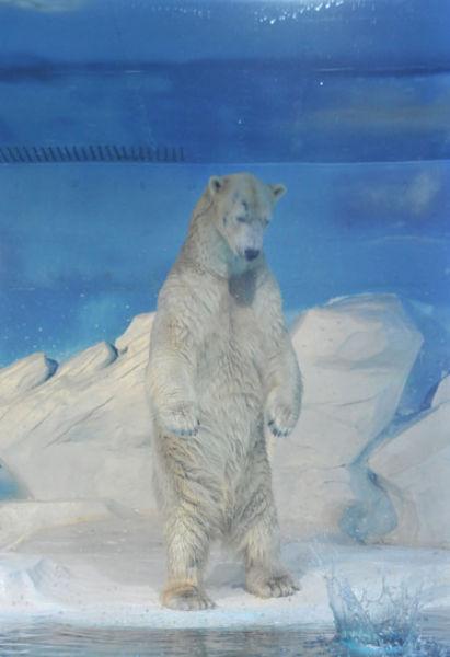 所以北极熊属于杂食性动物