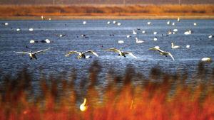 北大港湿地