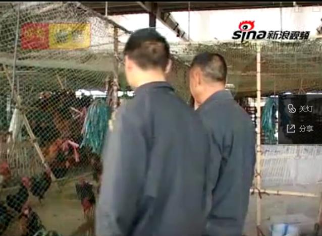 探访西南最大活禽交易市场紧张消毒