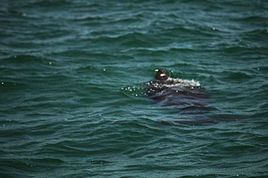 那可是濒临灭绝的海洋珍稀动物啊