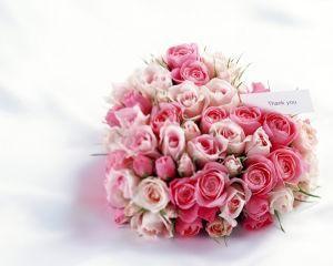 情人节将来临玫瑰价格暴涨 进口玫瑰一枝350元