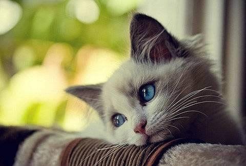 壁纸 动物 猫 猫咪 小猫 桌面 480_324