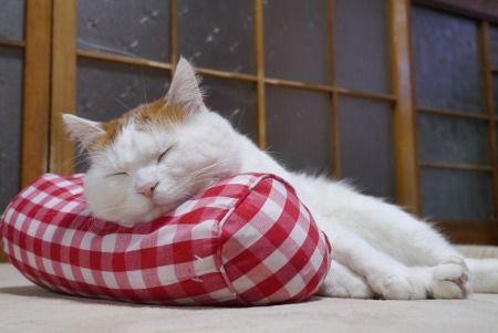 晒太阳就犯困瞌睡的 图片可爱