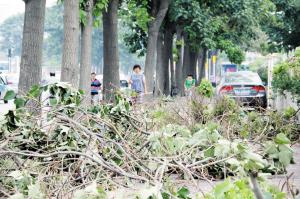 图为:剪了大树 堵了便道。 来源:城市快报 摄影/王昊
