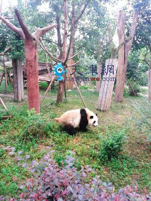 生态文化产业园的动物园